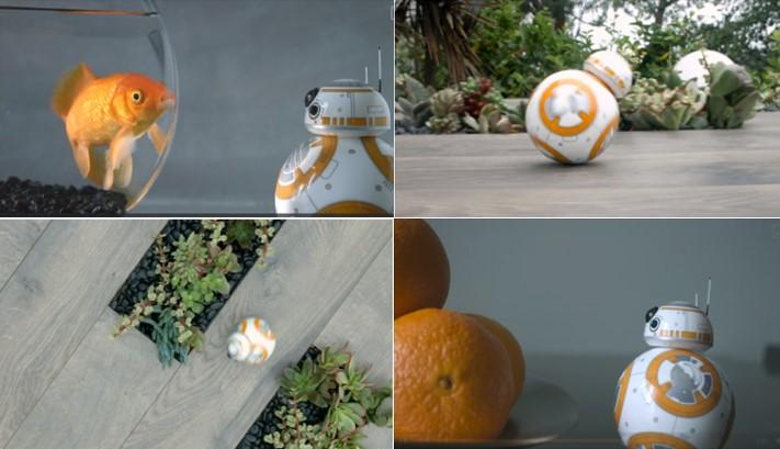 Escenas BB-8 Sphero en movimiento en un jardin, con naranjas y con un pez naranja